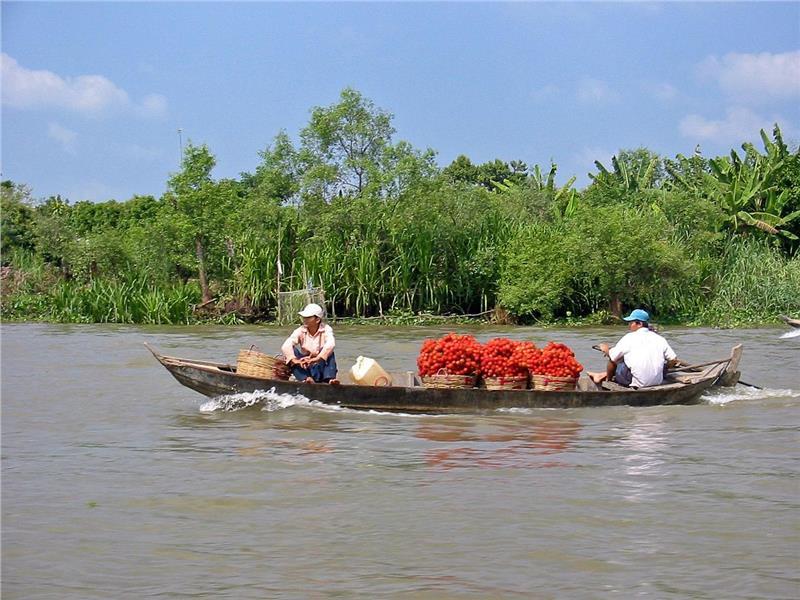 Rambutan Transport in Mekong Delta