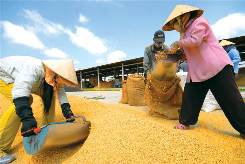 Rice exporting in Mekong Delta