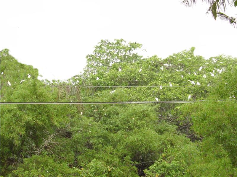 Tan Long Stork Sanctuary in Soc Trang