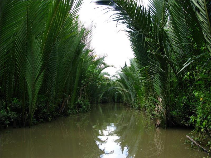 Impressive palm groves in Thoi Son Island