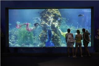 Top most visited aquariums in Vietnam