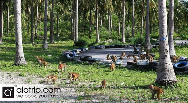 Monkey in Hon Lao Island