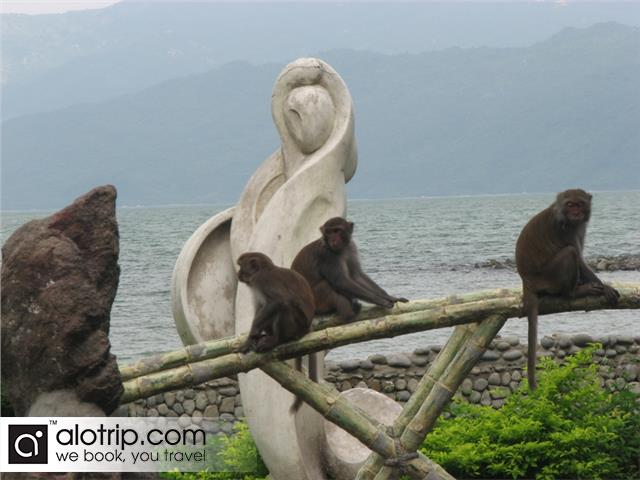 Monkey in Hon Lao Island