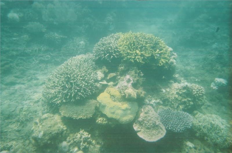 Hon Mun Marine Park - Magnificent coral reefs