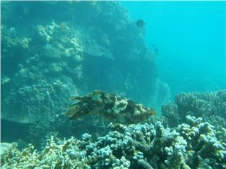 Most ideal points for scuba diving in Vietnam