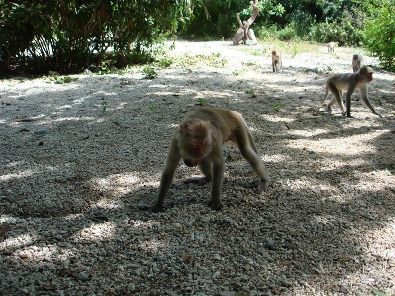 On Monkey Island Nha Trang