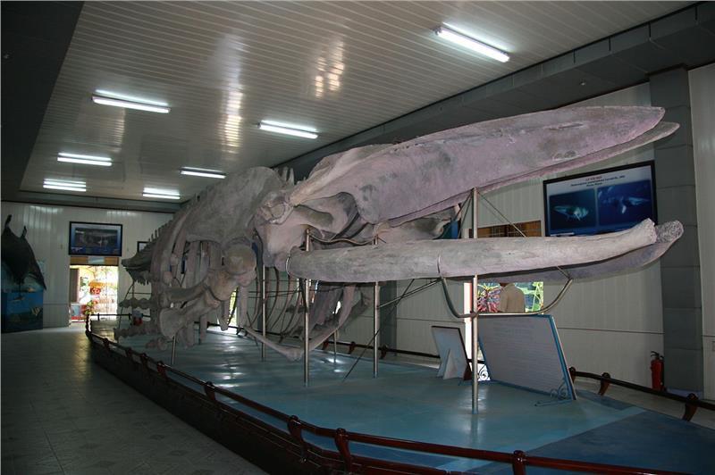 Inside Nha Trang Oceanography Institute