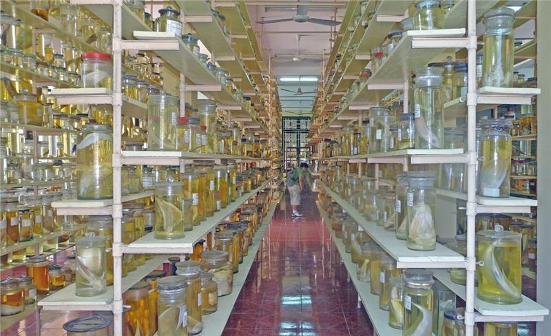 Specimen Room - Nha Trang Oceanographic Institute