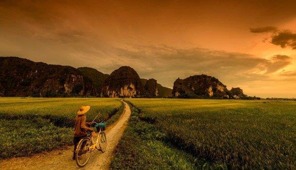 Con đường giữa cánh đồng rộng lớn
