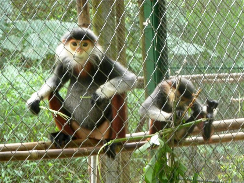 Monkeys in Cuc Phuong National Park