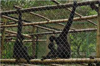 First Vietnam National Wildlife Park to be built in Ninh Binh