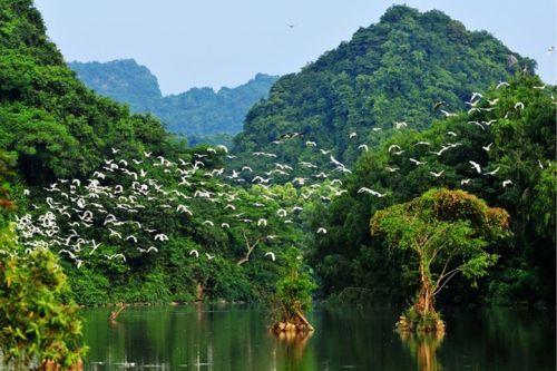 Flock of birds at Thung Nham ecotourism zone