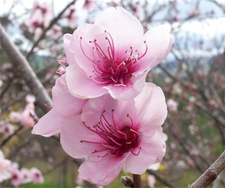 Enjoy 12 flowering seasons in Vietnam - Part 1