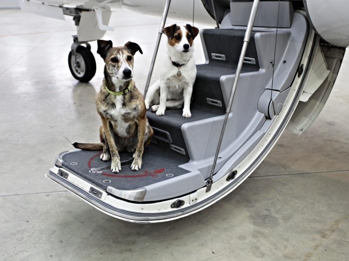 Làm sao để mang vật nuôi lên máy bay?
