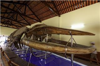 Van Thuy Tu Temple - Museum of biggest whale in SEA