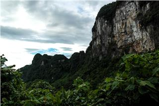 The biodiversity in Phong Nha - Ke Bang