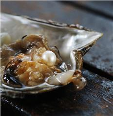 Discovering pearl in Phu Quoc Island
