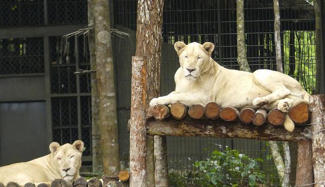 VinPearl safari Park