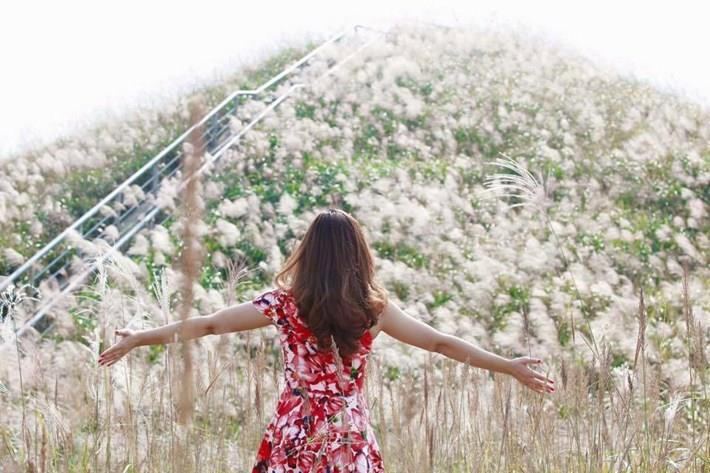 Thiên đường cỏ lau ở Bình Liêu