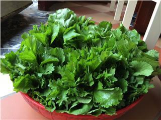 Sapa green cuisine