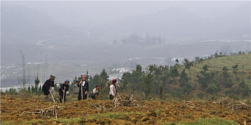 Black Hmong Women Tilling Soil, Ta Phin Valley