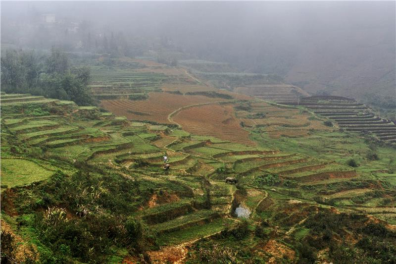 Terraced Rice Paddies in Ta Phin Valley, Sa Pa
