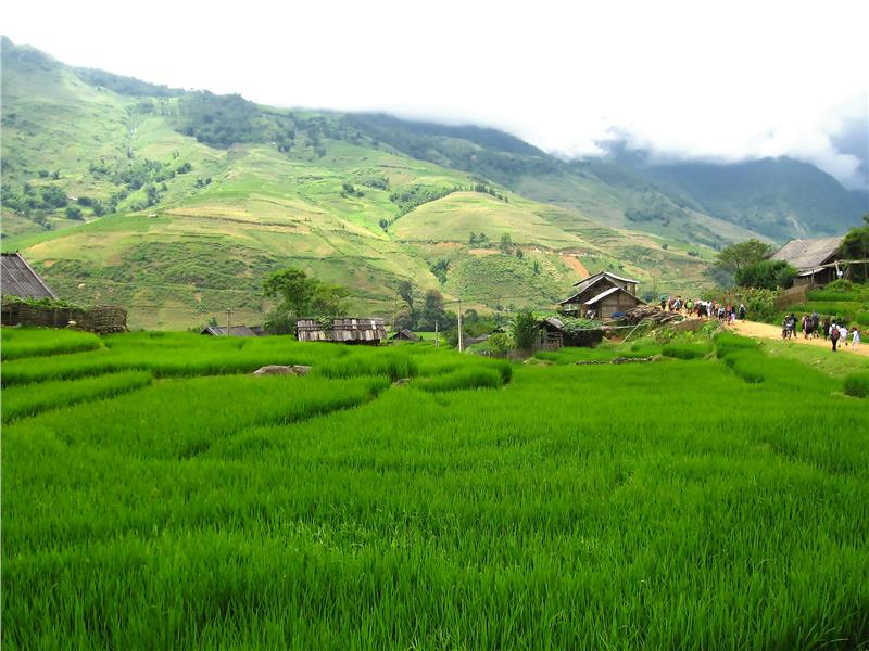 Rice fields along the path to Ta Van Village