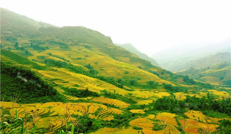 Sapa with rice terrace field