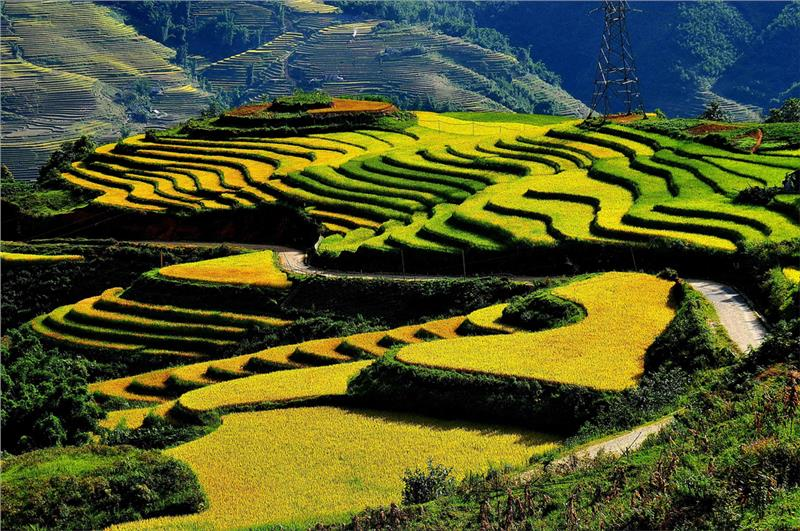 Terrace fields in Northwest Vietnam