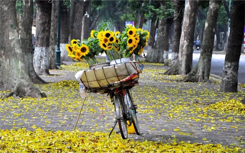 Những địa điểm ngắm mùa thu vàng đẹp nhất Hà Nội
