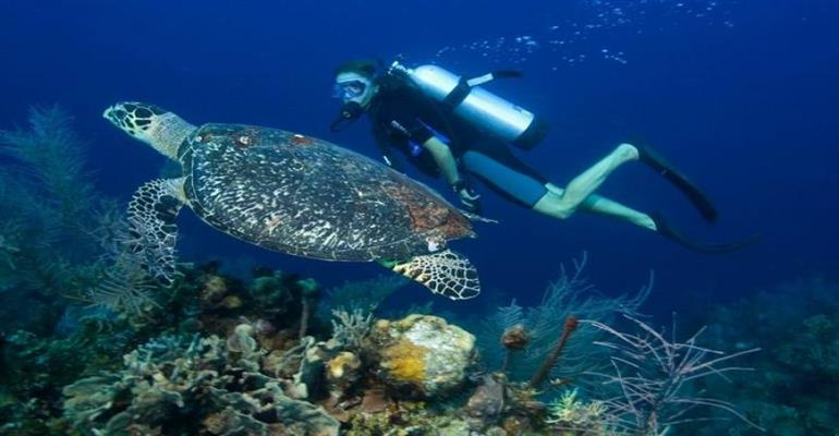 Travel to Vietnam and discover life underwater