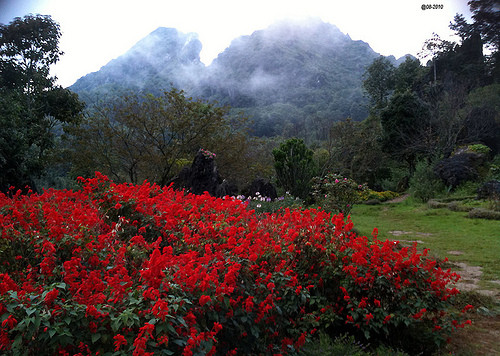 Visit Rose Valley in Vietnam trip