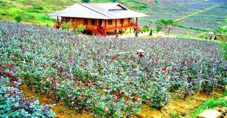 Visit Rose Valley in Vietnam trip