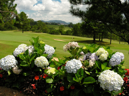 Vietnam travel guide on Dalat golf tours