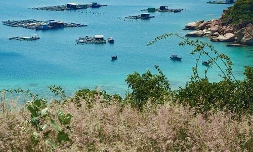 Binh Ba is the lobster island.