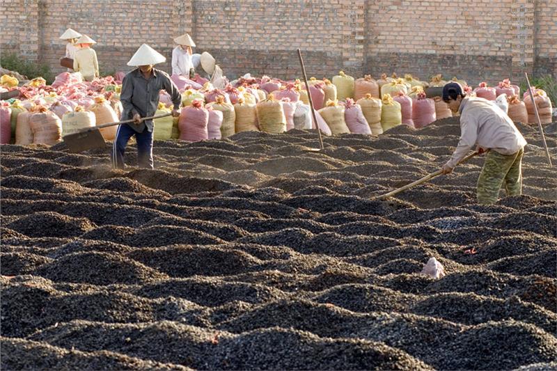 Produce coffee in Gia Lai