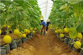 10 Vietnam hi-tech agricultural parks to appear by 2020
