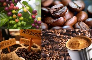 Vietnam coffee price strongly increases