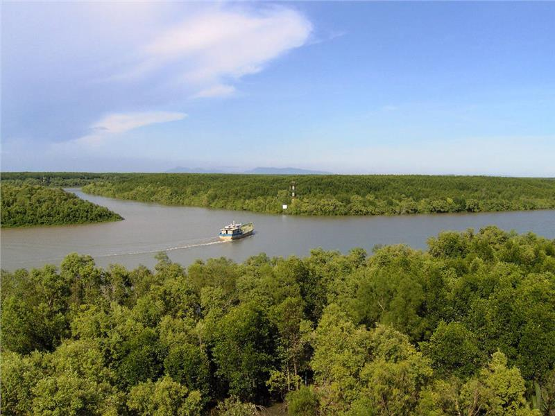 Mangrove forest in Lo Ren river