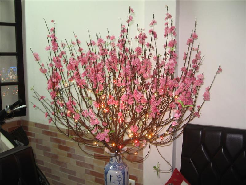 Peach blossom during Tet