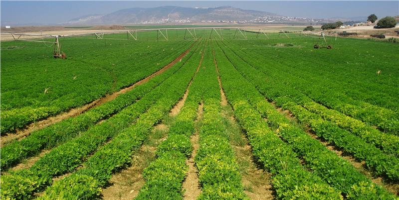 Israel Agriculture
