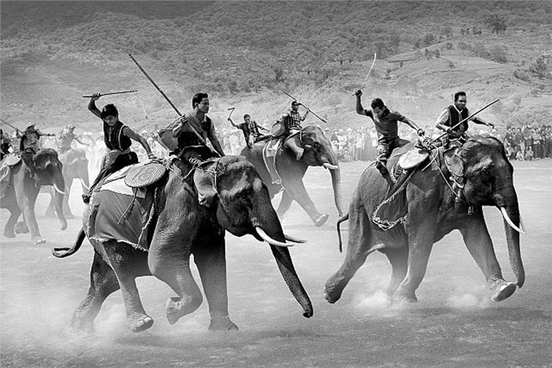 Photo Elephant racing of Tran Phong Photographer