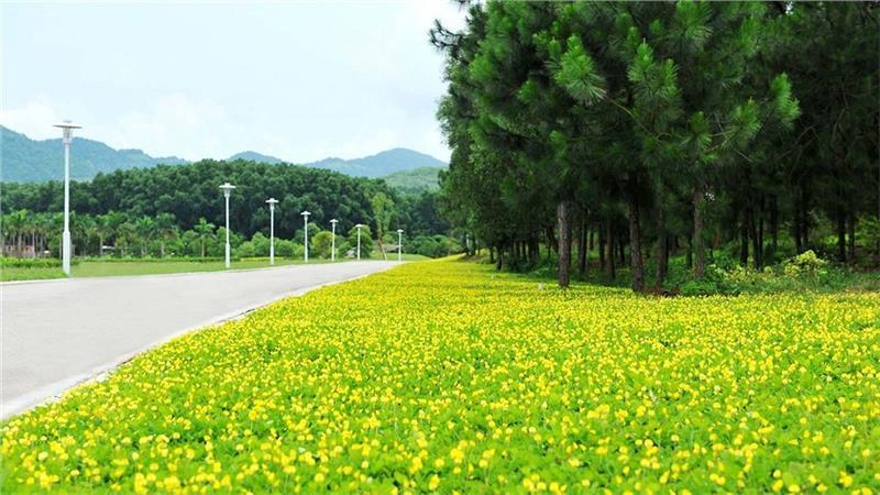 Natural landscapes in Flamingo Dai Lai Resort