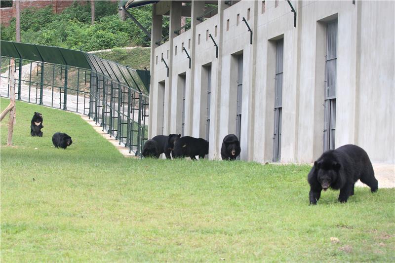 Vietnam Bear Rescue Centre adopts more moon bears