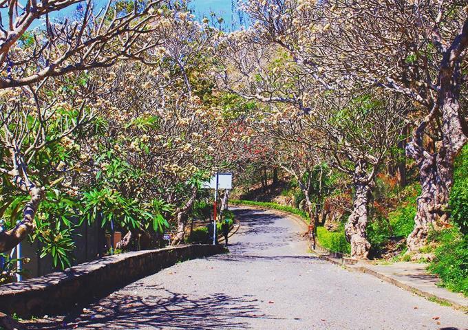 Đường cây khô tại Vũng Tàu