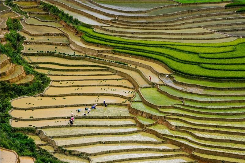 Mu Cang Chai - People grow rice