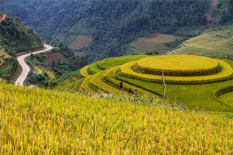 Week of Mu Cang Chai terraced field 2014