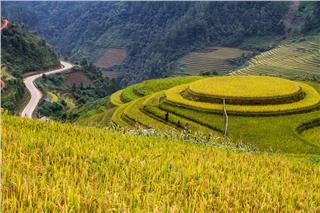 Stunning beauty rice terraces in Vietnam