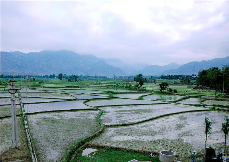 Muong Lo rice field, the second largest bowl of rice in Northwest